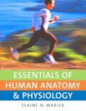 Essentials of Human Anatomy and Physiology 9th Edition