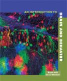 An Introduction to Brain and Behavior 3rd Edition