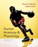 Human Anatomy and Physiology, Books a la Carte Edition 10th Edition