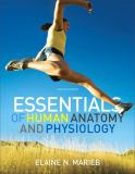 Essentials of Human Anatomy and Physiology 10th Edition